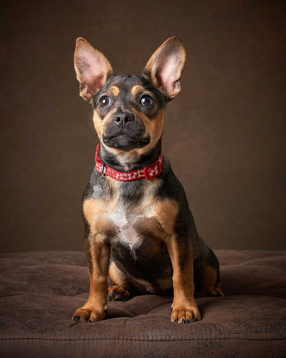 Dog Portrait Studio Photography 0011