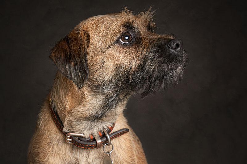 Dog Portrait Studio Photography smaller